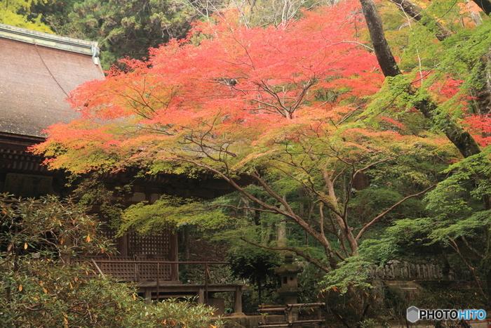 室生寺は、三重県と奈良県の県境近くを流れる室生川北岸にある室生山麓から中腹に建立する真言宗の寺院です。女人禁制であった高野山に対して、室生寺は女性の参拝が可能であったことから「女人高野」との異名を持っています。