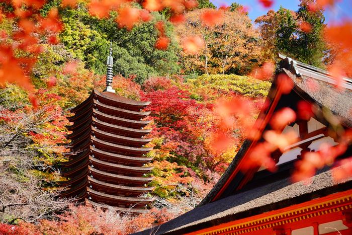 錦繍の秋に魅せられて…近畿地方での紅葉の名所を訪れよう【奈良県編】