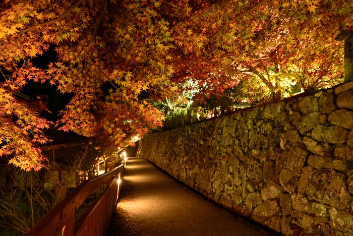 談山神社では、紅葉の時季になると、夜間のライトアップも施されます。漆黒の世闇を背景に光を浴びてカエデやモミジが浮かび上がる様は幻想的で、いつまで眺めていても飽きることはありません。