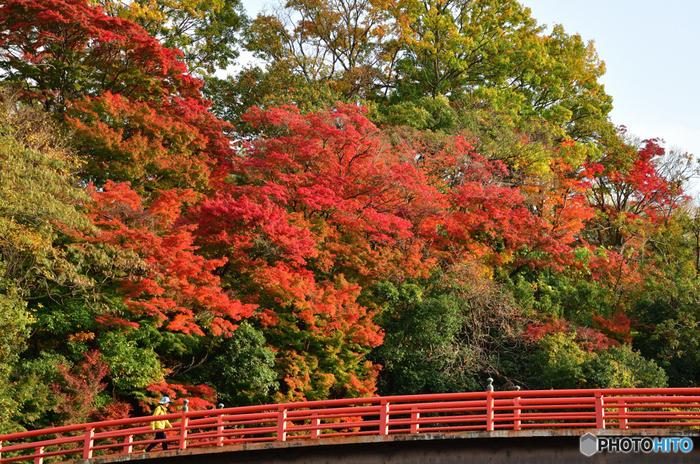 奈良県立竜田公園は、竜田川沿い約2キロメートル、総面積14ヘクタールにおよぶ都市公園です。古くから紅葉の名所として知られており、百人一首でもおなじみの能因法師に「嵐ふく 三室の山の もみじ葉は たつ田の川の 錦なりけり」と詠まれている程です。