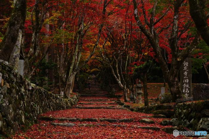境内には、200本を超えるモミジが植樹されており、毎年晩秋になると大勢の観光客が訪れます。参道が散り紅葉で深紅の絨毯を敷き詰めたような姿になる様は美しく、カメラに収められずにはいられないほどです。