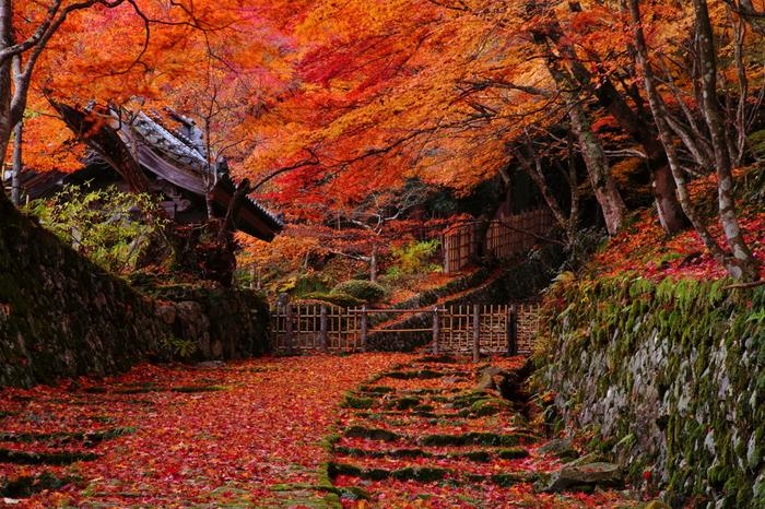 境内に植樹された無数の落葉樹の彩りは見頃を終えた後も、訪れる人々を楽しませてくれます。散り紅葉が参道に幾層にも折り重なっている様子は、まるで紅葉の絨毯を敷き詰めたかのようです。