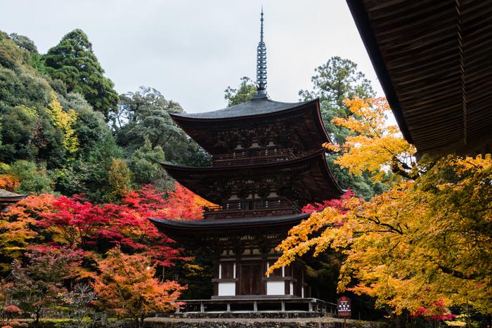 紅葉の名所として名高い西明寺境内には、国宝に指定されている三重塔をはじめ、数々の重要文化財が安置されています。鮮やかに彩った樹々と、三重塔の競演は、まるで一幅の掛け軸のような素晴らしさです。