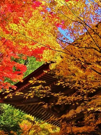湖東三山(金剛輪寺、百済寺、西明寺)の一つに数えられる西明寺は、平安時代初期に開基された天台宗の寺院です。