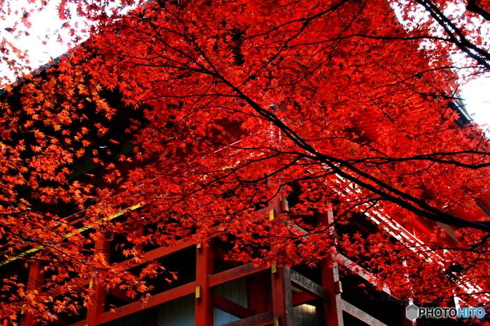 比叡山延暦寺では、毎年秋になると、平地より一足早く紅葉の季節が訪れます。深紅に染まったモミジと無数に点在する伽藍との競演は美しく、どこを切り取っても絵になります。