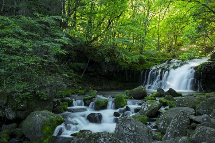 ビーナスライン沿いにある「蓼科大滝」はドライブの合間に立ち寄りたいスポット。岩に苔の生える緑豊かな森林を抜けると、そこには涼しげな滝が。川のせせらぎと、滝の水しぶきが作り出すマイナスイオンに癒されること間違いなしです。