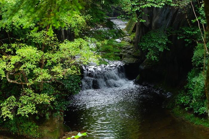 「清水渓流広場」は、千葉県君津市にある幻想的なスポットとして、SNSを中心に多数のメディアで注目されています。「濃溝(農溝)の滝」は、小さな滝が流れていて、遊歩道の上から見ることができます。