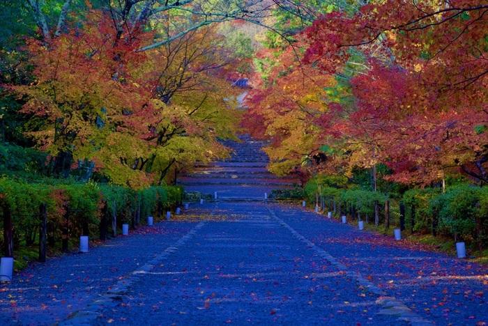 二尊院参道は、馬が駆け抜けることができるほど広いことから「紅葉の馬場」と呼ばれています。紅葉の馬場では、晩秋になると参道の両側に植樹されたカエデが鮮やかに紅葉し、背後の小倉山のモミジの紅葉と併せて素晴らしい景色を臨むことができます。
