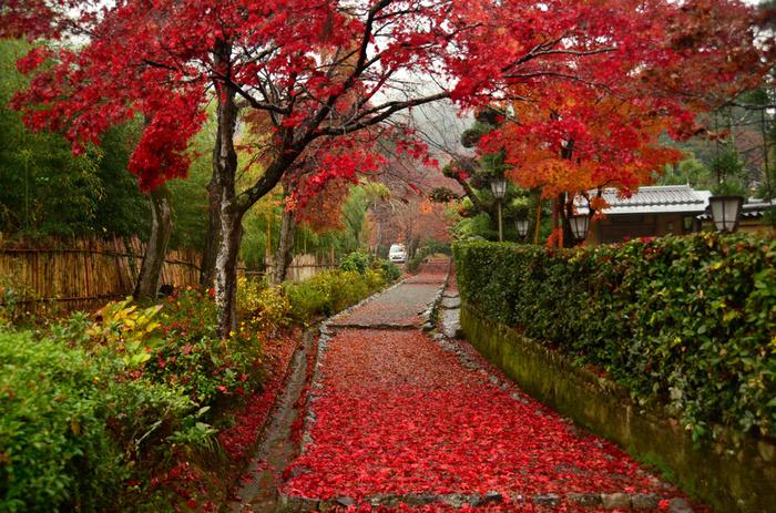 後亀山天皇嵯峨小倉陵参道は、二尊院から、嵯峨野奥地に位置する化野念仏寺エリアへ行く途中にある道です。ここは、紅葉の名所として大勢の人で賑わう秋の京都の中でも比較的人が少なく、紅葉スポットの穴場として人気があります。