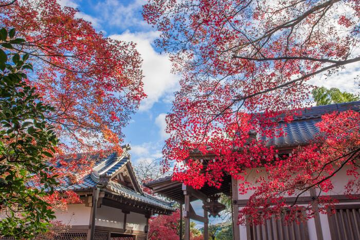 小倉山中腹に建立する日蓮宗の常寂光寺は、境内から嵯峨野市街地を一望できる眺望スポットとして知られている仏教寺院です。