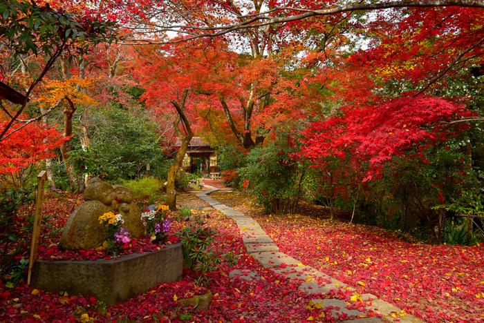 1646年に建立された直指庵は、大覚寺の北側、嵯峨野奥地の竹林の中にひっそりと佇む浄土宗の寺院です。