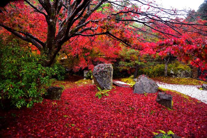 寺院としての規模はそれほど大きくはないものの、日本人が好む「詫び」「寂び」の風情があり、参拝者の心を癒してくれる不思議な魅力を持つ直指庵では、晩秋になると樹々が見事に紅葉します。特に散り紅葉の美しさは傑出しており、まるで深紅の絨毯を境内に敷き詰めたかのような景色を楽しむことができます。