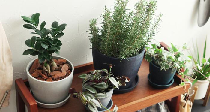 鉢植えタイプのインテリアグリーンを整然と並べるのではなく、ランダムに置くのがブルックリン流。本場ブルックリンで暮らす人々のお部屋にも、自由な発想で鉢植えが飾られています。