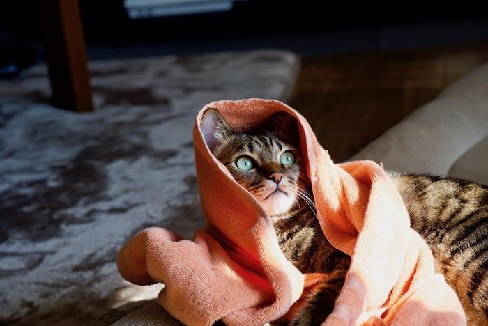 タオルは汗や雨を拭く以外に、緊急用に必要な場合も。首に巻いて日焼け防止や、濡らして熱中症対策にも役立ちます。