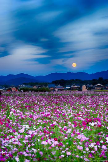 いかがだったでしょうか。2019年の十五夜も豊作に感謝の意を込めて美味しく「観月」してみてくださいね。