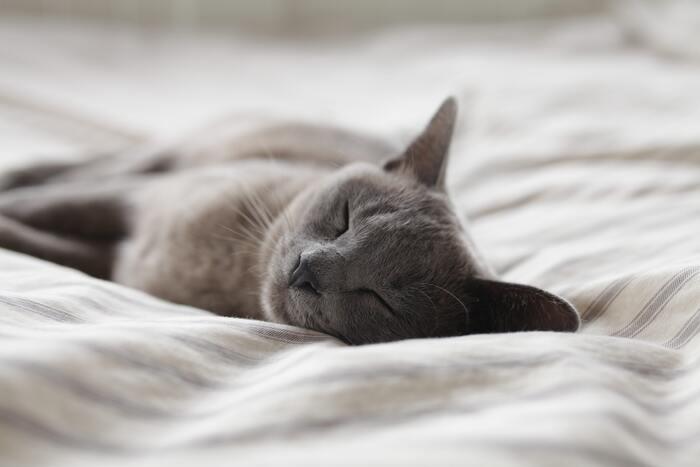 就寝時にクーラーをつけっぱなしにするのは、体が冷えすぎたり空気が乾燥したりするのであまりおすすめできません。しかしクーラーがないと、寝苦しくて疲れがしっかり摂れないですよね。クーラーはタイマー設定にして、明け方など一定の時間になったらつくように設定しましょう。併せて、発熱量が高い足元に扇風機を置いておくのも◎。足が冷えすぎないよう、首振り設定にしておくとベターです。