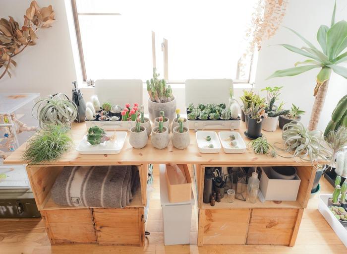 植物に囲まれて過ごしたい方は、こんなコーナーをつくってみてはいかがでしょう。窓際で陽の光をいっぱいに浴びて気持ちよさそうな植物たち。置かれている台は、なんとリンゴ箱をDIYしたのだそう。お手入れの道具がすぐ近くに置かれ、使いやすさも抜群です。