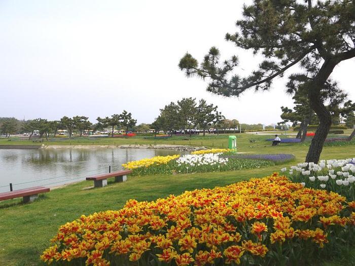 海と山に囲まれた自然溢れる福岡には、多くの素敵な公園があります。家族でレジャーを楽しめる広大な公園から、お散歩にぴったりの都会のオアシスまで魅力的な公園がいっぱい。今回は、その中から厳選して福岡を代表する4つの公園の魅力と楽しむポイントをご紹介します。