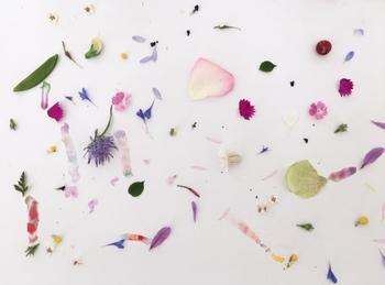自然の中にある色を深く見つめてきた松尾さんだから思いついたのかな?と思える素敵な色のしりとり。あの花からこの花へ、蝶々のように飛び回って...