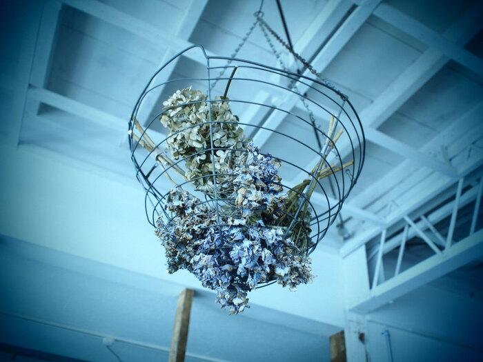 ワイヤーバスケットにざっくりと突っ込んだドライフラワー。なんとも斬新な飾り方で、インパクトがあります。天井から吊るしたバスケットの底面からお花がよく見えるように、あえて下向きにお花を入れて。