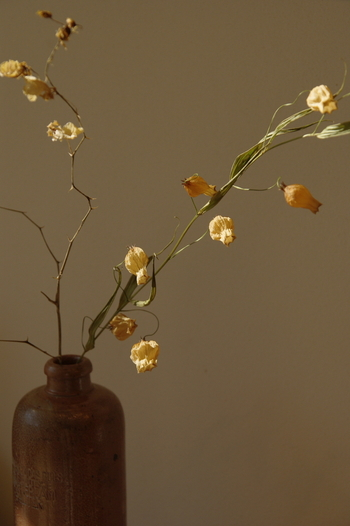 すらりと伸びるラインの美しさが強調されて、まるで生け花のよう。ドライフラワーなのに、和の面持ちを感じます。