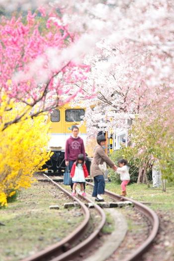 最近、生まれてから1か月ごとに写真を撮る「マンスリーフォト」が流行していますが、徐々に子どもが大きくなるとそんな機会も徐々に減ってきて・・・。  そこでご提案したいのが、「定点観測」的な写真撮影。  例えば、毎年1回、同じ場所、同じ桜の木の下で撮影してみてはいかがでしょう。  子供が小さい頃だけでなく、成長して大人になっても、ずっと撮り続ければ・・・本当に何ものにも代え難い、家族の宝物になりますよ。