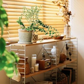 窓辺にシェルフをレイアウトして、上には観葉植物を。 日当たりがいいので好環境なだけではなく、葉に光が当たる美しい様子が楽しめます。
