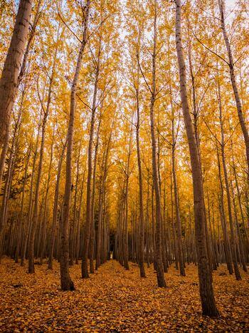 夏が海を連想するなら、秋は森のイメージ。実りの秋とも言われるこの季節の模様替えは、草木や木の実など森っぽい雰囲気の暖色系を取り入れると、お部屋が一気に秋らしくなりますよ。