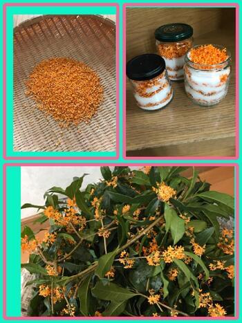 ① キンモクセイは花を完全に乾かしてしまうと香りがとんでしまうため、ほどよく半乾きの状態に。  ② そして容器に、「塩」「半乾きのキンモクセイ」「塩」「半乾きのキンモクセイ」と・・・交互にビンに詰めていきます。  ③ 最後にフタをして、約1か月ほどそのまま保存(熟成)すれば完成です。