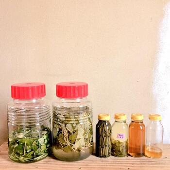 チンキとは乾燥したハーブなどをアルコールに浸して有用成分を抽出したもののこと。ハーブなどの成分を効率よく抽出・保存して利用できます。  キンモクセイのチンキを作って、優しい甘い香りを閉じ込めてしまいましょう!