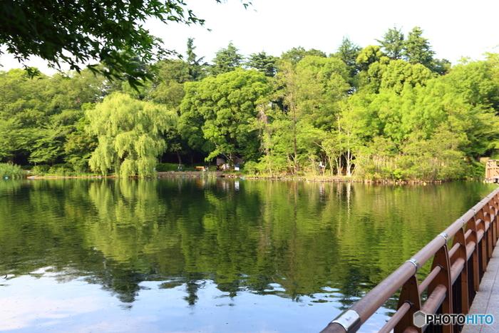 井の頭池を中心に広がる井の頭恩賜公園は、豊かな森林と水のせせらぎが癒やされるスポットです。季節ごとに違った景色を楽しめるのが魅力です。