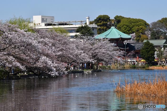 都会の中のオアシス、上野恩賜公園。広い敷地には美術館や博物館、動物園など有名な観光スポットが集結しています。1日で回りきれないほど、見所満載のスポットです。