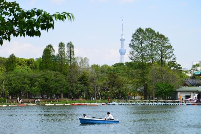 不忍池では、手漕ぎボートやスワンボートを楽しめますよ。4月には池のほとりに並ぶ桜、7月から8月にかけては水面に咲くハスが見られます。美しく咲く花を眺めながらボートを漕ぐと、リラックスできること間違いなしです!