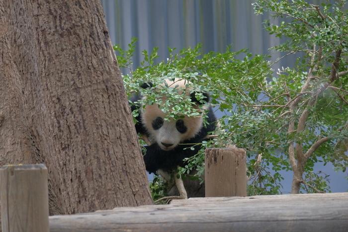 動物園の中で日本一の入園者数を誇る「上野動物園」。2017年にパンダのシャンシャンが産まれたことで、ますます人気スポットになりました。園内には約350種類2500点の動物がいます。動物たちの愛らしい姿はずっと見ていられますね!