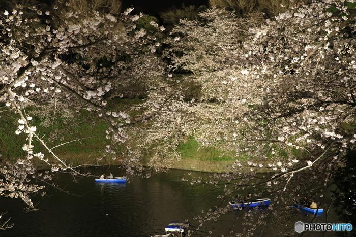 夜になるとライトアップされ、幻想的な光景が広がります。下から見上げたり、水面に反射した様子を眺めたり、色々な形で桜を観賞できるのが嬉しいですね。3月下旬から4月上旬までの、わずかな期間だけ楽しめる絶景です
