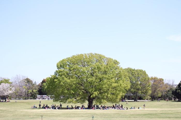 四季折々の花が咲き誇る昭和記念公園。散策やスポーツを楽しんだり、バーベキューをしたり、楽しみ方は人それぞれです。1日中満喫できるスポットですよ♪