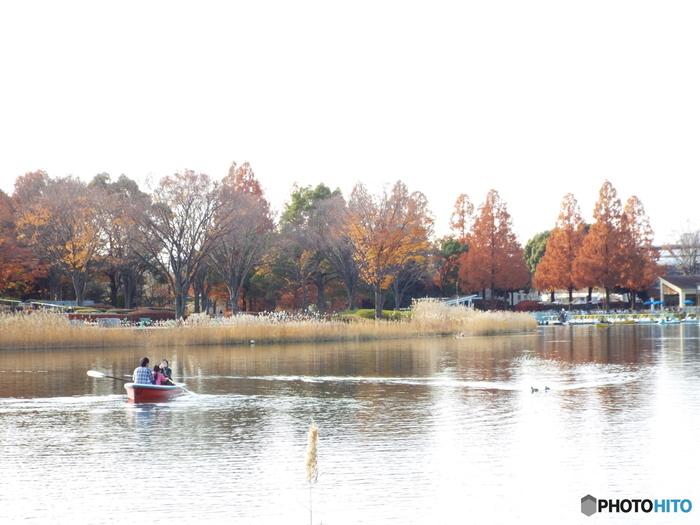 水鳥の池では、手漕ぎボートやペダルタイプのボートを借りられます。家族や友達と一緒にボートを進めるのは、チームワークが試されますね。
