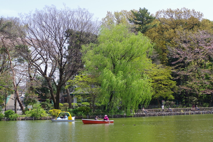善福寺池が公園の半分近くを占める善福寺公園。広い池のほとりにはたくさんの木が植えられ、癒やしのスポットになっています。