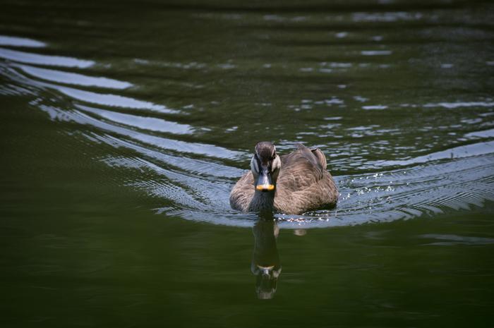穏やかな水面をボートで進んでいると、カモやカイツブリ、カワセミなどの鳥たちに出くわすことも。ボートに乗りながら野鳥観察ができるのは貴重な体験ですよね。
