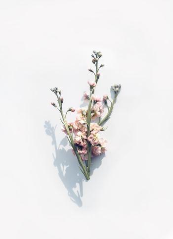 夜眠る前に一日の出来事を振り返りながら「ありがとう」と感謝の気持ちを思い起こしたり、日記やメモに気付いた「ありがとう」を書き綴るのを習慣にしたりしていくと、自分の心の中から自然とポジティブで優しい気持ちが育っていきますよ。