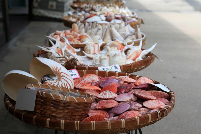 お土産用の干物や加工品、このように、珍しい貝も!耳にあててみたくなりますね♪  時間に余裕があれば、ぜひあわせて立ち寄ってみてください。