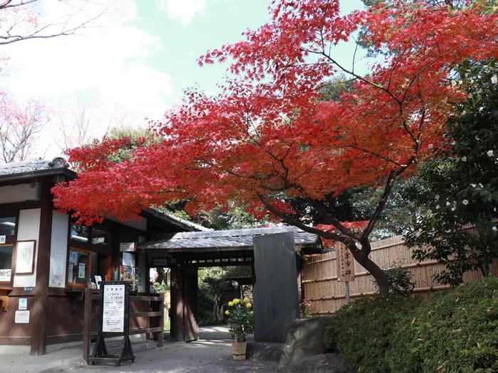 江戸の町人文化が発展した時代に造られた「向島百花園」は、都心にいながらにして、野山の草花を間近に鑑賞できる人気スポット。秋の七草をはじめ、梅やカタクリなど約230種の草花が楽しめます。秋の七草の【萩】を探してみましょう。