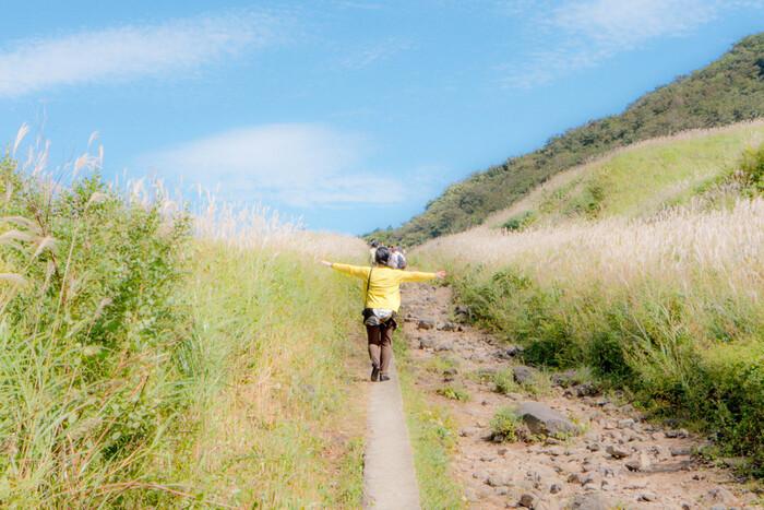 お月見に欠かせない【ススキ】。穂が動物の尾に似ていることから「尾花(おばな)」とも呼ばれています。関東周辺でススキを見るなら、箱根の仙石原がおすすめ。「かながわの景勝50選」のひとつにも選ばれていて、秋のハイキングにもぴったりです。