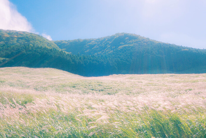 仙石原は遊歩道が整備されているので、草原の中を散策することができます。一面のススキは秋にしか見られない絶景。また、ススキには「すくすく立つ木(草)」という意味があります。しなやかさと力強さ、生命力を感じてみてはいかがでしょうか。