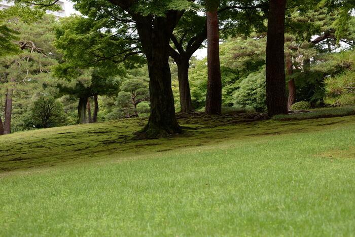 日本女性の清楚さを「大和撫子」と表現することがありますが、【撫子】は秋の七草に数えられています。JR中央線・西武国分寺線の国分寺駅から歩いて2~3分の「殿ヶ谷戸庭園」で、その美しい姿を見ることができますよ。