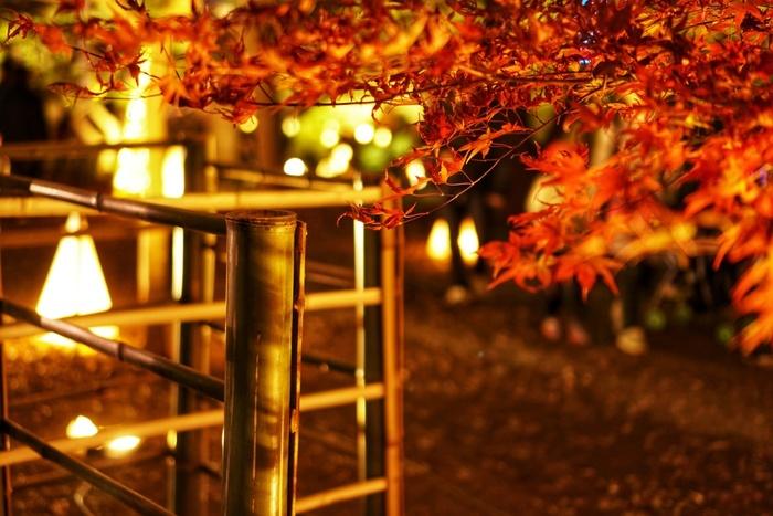10月中旬~11月にはライトアップも行われていて、幻想的な風景を楽しむことも。園内には、女郎花以外にも秋の七草があるので、探してみるのもおすすめです。