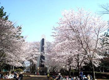動物たちのスペースの隣には広場があり、お弁当を持ってピクニックを楽しむにはぴったりです。桜の時期にはたくさんのお花見客で賑わいます。