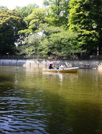 公園内にある弁天池では、30分間手漕ぎボートを楽しめます。営業は3-11月の土日祝日です。春は桜、夏は木々の緑を眺めながら、ゆったりとした時間を過ごせますよ。池には鯉や亀がいて、泳ぐ姿を見られます。
