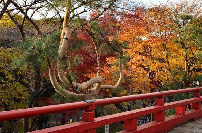 """豊かな自然と花の名所として庶民に親しまれてきた""""上野の山""""でしたが、幕末の混乱期、戊辰戦争(上野戦争)時に、旧寛永寺の堂宇のほとんどが灰燼に帰し、周辺一帯も無残に焼け野原と化しました。  【「清水観音堂」は、桜も素晴らしいが晩秋の紅葉時も美しい。画像は、観音堂の舞台。舞台の先には、不忍池が広がっている。舞台中央にあるのは、先に紹介した広重の「江戸百景」で描かれた""""月の松""""を再現したもの。】"""