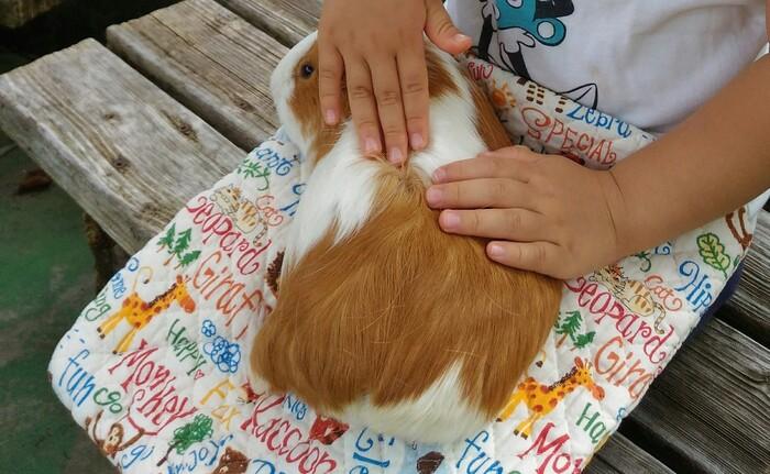 「こども動物広場」では、小動物とのふれあい体験が大人気!モルモットやうさぎ、わんちゃんもいますよ。